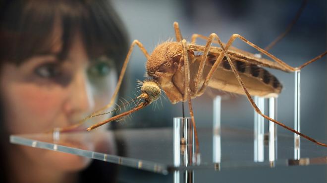La Facultad de Ciencias aportó nueva información sobre el dengue en Uruguay