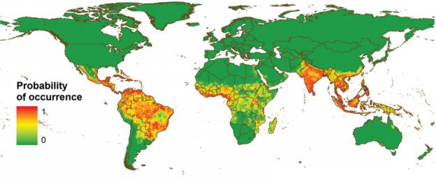 El dengue en el mundo