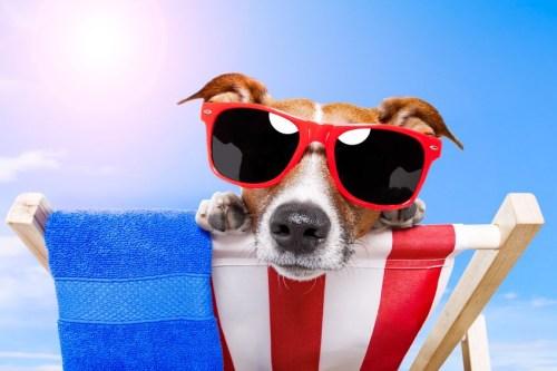 La multa por la presencia de perros en las playas es de una unidad reajustable