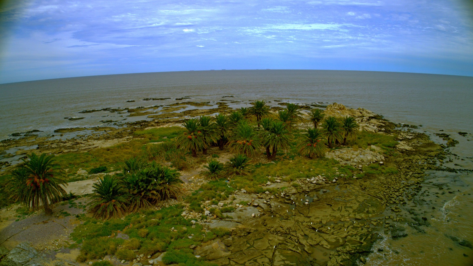 La Isla de las Gaviotas de arriba y de cerca