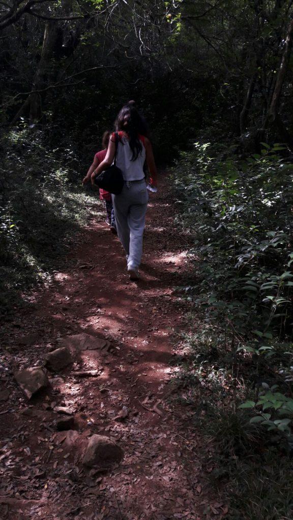 La mayor parte del camino para la visita a los Pozos Azules es bajo la protección de los árboles