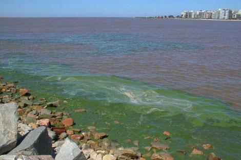 Así se pueden distinguir las cianobacterias en el agua y también la arena (foto IMM)