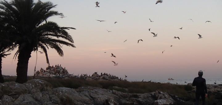 Isla de las gaviotas